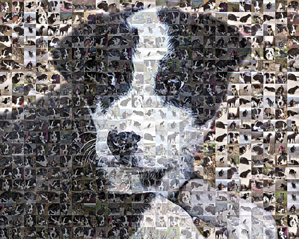 The Mosaic Guy